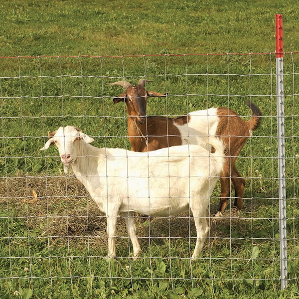 Fencing to Keep Goats in the Pasture - Boer Goats Home; Boer and