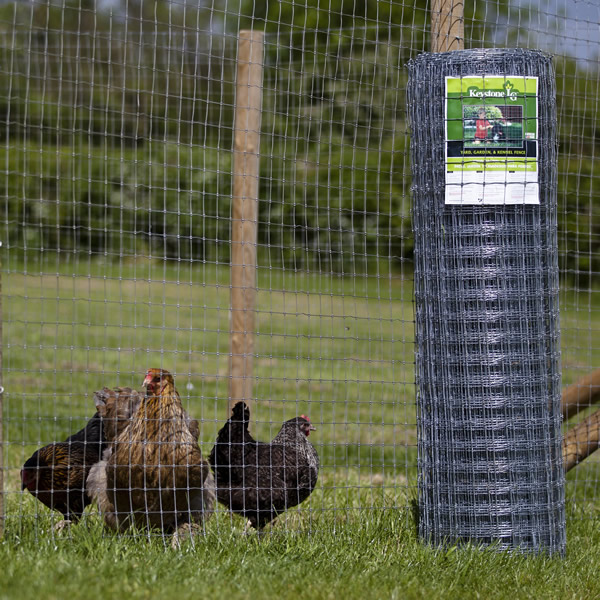 Fence poultry wire fencing