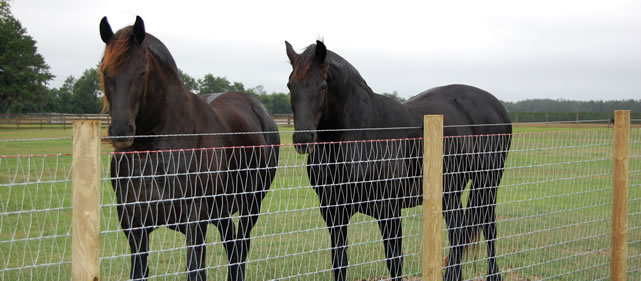 Keepsafe Equestrian Horse Fence with barbless cable