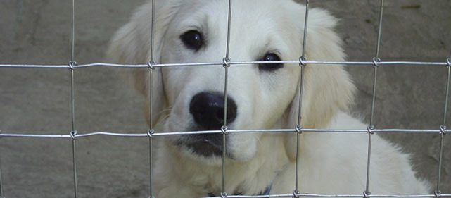Kennel Wire Fencing | Yard Garden And Kennel Wire Fence Chicken Fencing Range From The